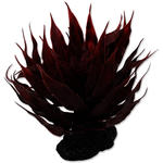 Rostlina REPTI PLANET sukulent Agave červená 18 cm 1ks