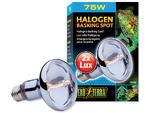 Žárovka EXO TERRA Halogen Basking Spot 75W
