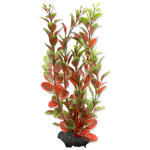 Rostlina TETRA Red Ludwigia  M