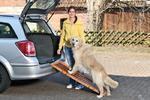 DOG ramp - skládací, rozměr  120x30x6cm