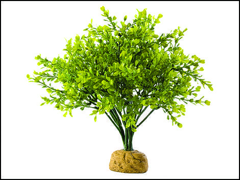 Rostlina EXO TERRA Boxwood Bush