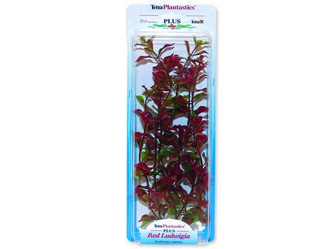 Rostlina TETRA Red Ludwigia 23 cm 23 cm