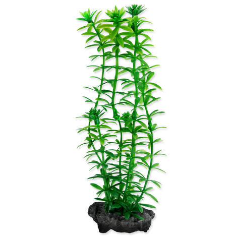 Rostlina TETRA Anacharis S 1ks