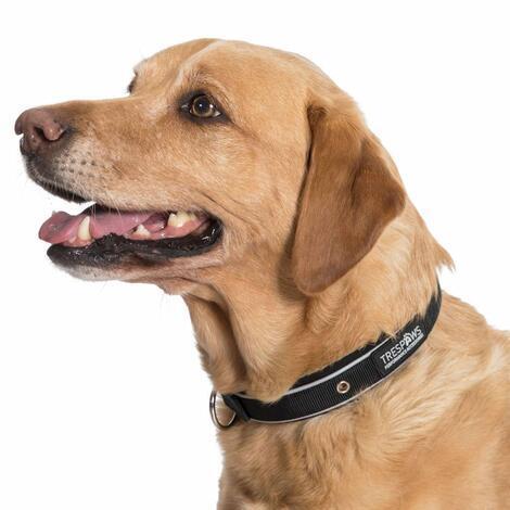 KEIRA - DOG COLLAR - 2