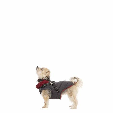 HERCULES - 2 IN 1 DOG JKT WITH HARNESS - 3