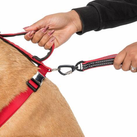 CHESTER - DOG RUNNING BELT AND LEASH - 4