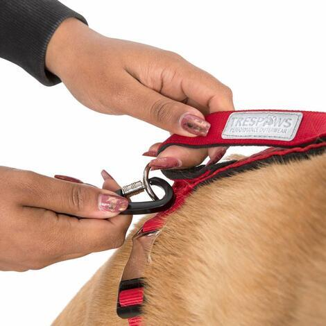 CHESTER - DOG RUNNING BELT AND LEASH - 5