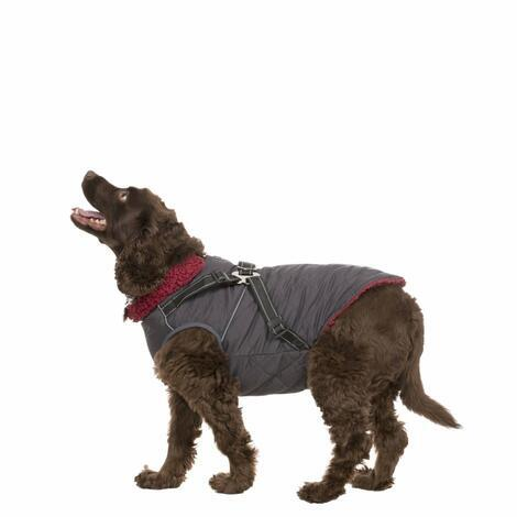 HERCULES - 2 IN 1 DOG JKT WITH HARNESS - 6