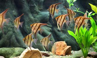 Kolik a jak často krmit rybičky?