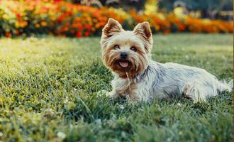 Psi pro alergiky - s dopravou zdarma BEZEDNAMISKA.CZ