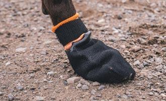 Boty na zimu i pro psa? Proč ne. Vlastně proč ano…