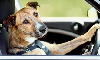 Na dovolenou se psem - s dopravou zdarma BEZEDNAMISKA.CZ
