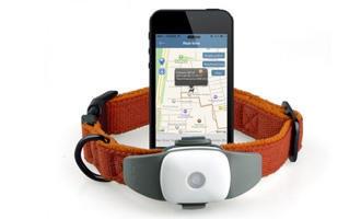 JAK VYBRAT GPS OBOJEK PRO PSA – NEBO KOČKU - s dopravou zdarma BEZEDNAMISKA.CZ