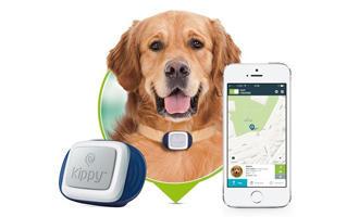 Proč pořídit svému mazlíčkovi GPS obojek?