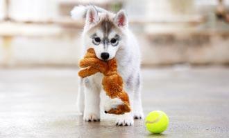 Která je ta pravá hračka pro psa?