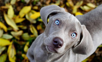 Zbořené mýty o tom, jak vidí pes! - s dopravou zdarma BEZEDNAMISKA.CZ