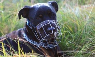 K čemu jsou užitečné náhubky pro psy a na co si dát pozor? - s dopravou zdarma BEZEDNAMISKA.CZ