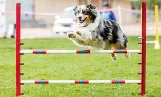 Jakým sportům se můžete se svým psem věnovat? A proč vůbec?