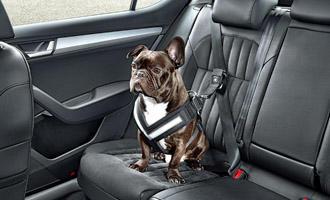 Pohodlná cesta autem na dovolenou i se psem - s dopravou zdarma BEZEDNAMISKA.CZ