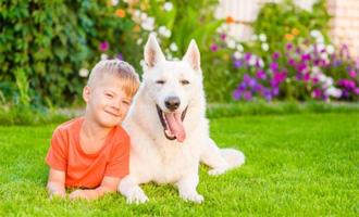 Jak připravit psa na příchod miminka - s dopravou zdarma BEZEDNAMISKA.CZ