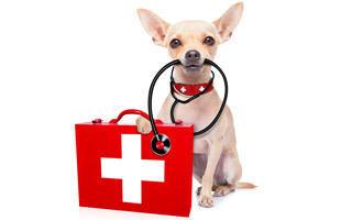 První pomoc pro psy - s dopravou zdarma BEZEDNAMISKA.CZ
