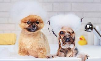 Jak a jak často koupat psa