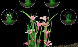 MOJE PRVNÍ AKVÁRIUM - rostliny