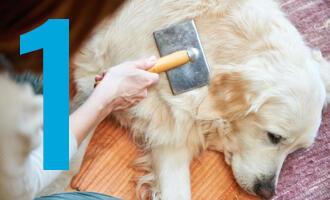 Proč a jak používat kartáč pro psa a kočku?