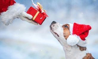 Vánoční dárek pro psa