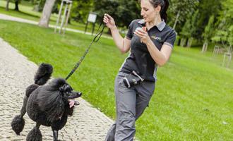 Výcvik psů: výchova štěněte - doprava ZDARMA na BEZEDNAMISKA.CZ